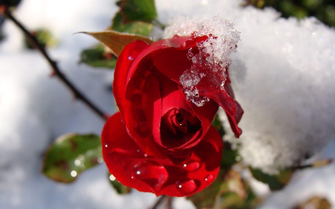 Quando il freddo secca la pelle: 4 elisir di bellezza che ho amato quest'inverno